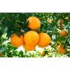 橘子各部位的食用价值-阿里医生