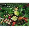 顺旺农产品配送服务是具有口碑的东莞蔬菜批发服务供应商 洪梅蔬菜批发