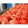 高粱酒的酿造方法 可靠的酿造技术辽中县鑫粮源酿酒技术提供