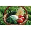 顺旺农产品配送服务供应具有口碑的东莞蔬菜批发:望牛墩蔬菜批发