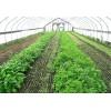 蔬菜大棚建设中容易出现的几个误区