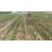 微耕机价格小型微耕机 山东微耕机厂家 多功能微耕机价格