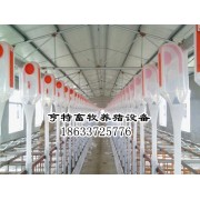 广东清远猪场自动化喂猪上料系统安装设计