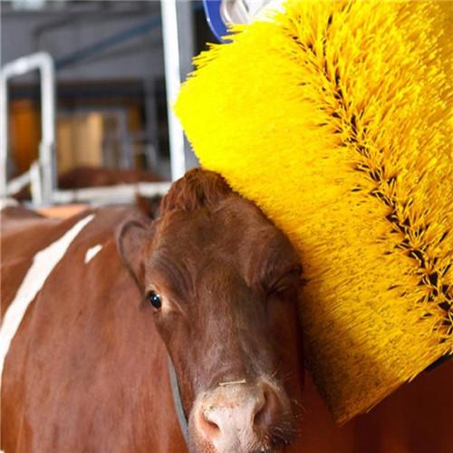 奶牛挠痒刷 带感应牛体按摩刷机 用于清扫牛体污垢
