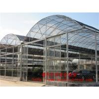 专业建设连栋薄膜温室 农业养殖用薄膜温室供应 量大从优